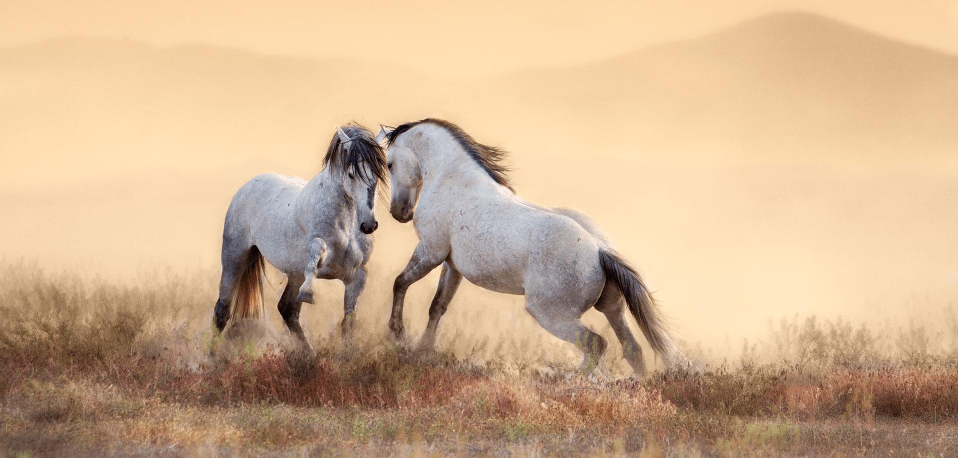 fine art horse image